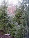 Snow_317_4