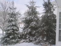 Snowy_trees_2
