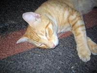 Westin_cat